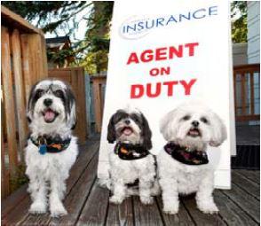 dog agent